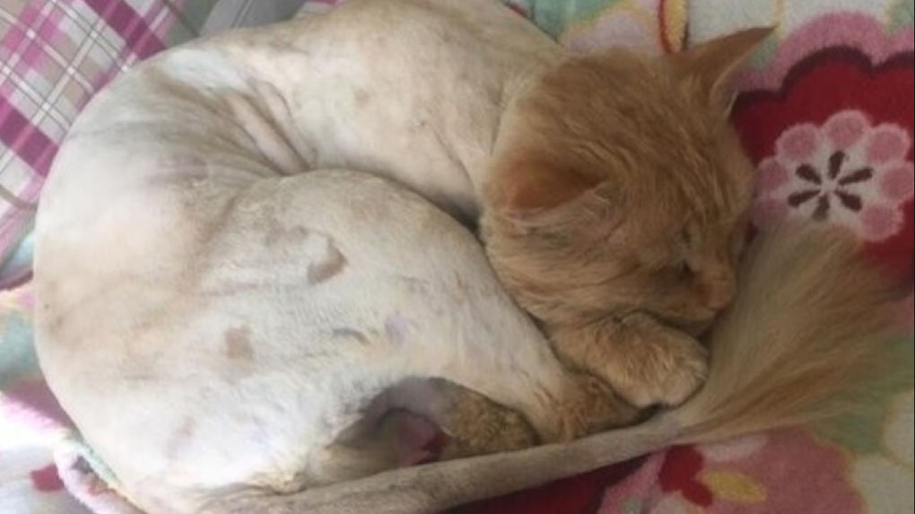 «Моя киса»: в Новосибирске зооклептоманка крадёт чужих питомцев