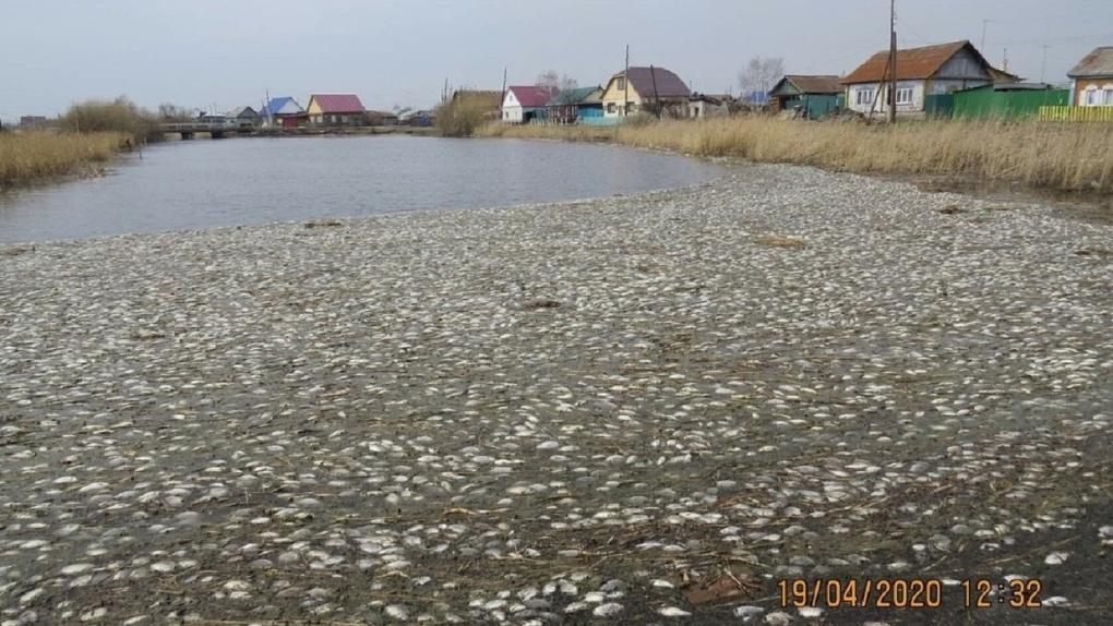 В Минприроды Омской области считают нормальным массовую гибель рыб в водоемах