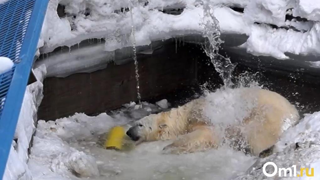 Трогательное видео купания белого медведя показал новосибирский зоопарк