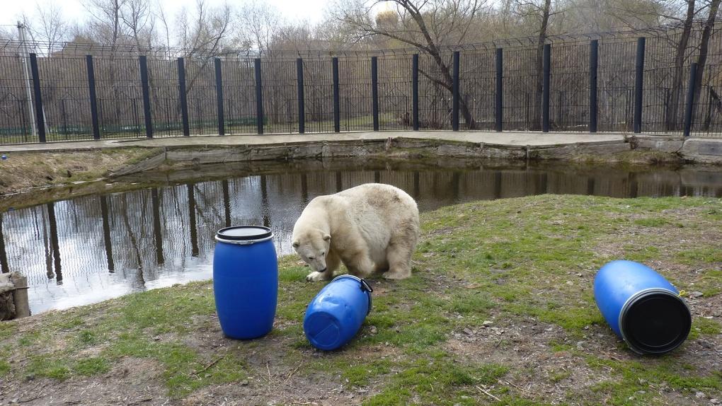 В Большереченском зоопарке 29-летней Гуле подарили новые игрушки - ФОТО