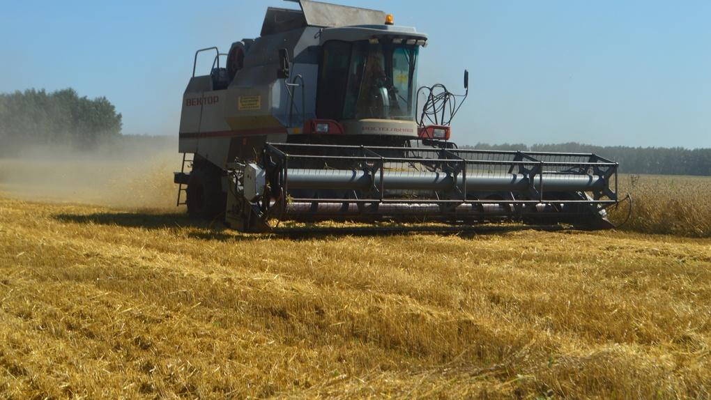 На полях Омской области начали убирать урожай