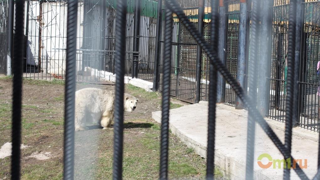 У белой медведицы Гули появился поклонник из Японии