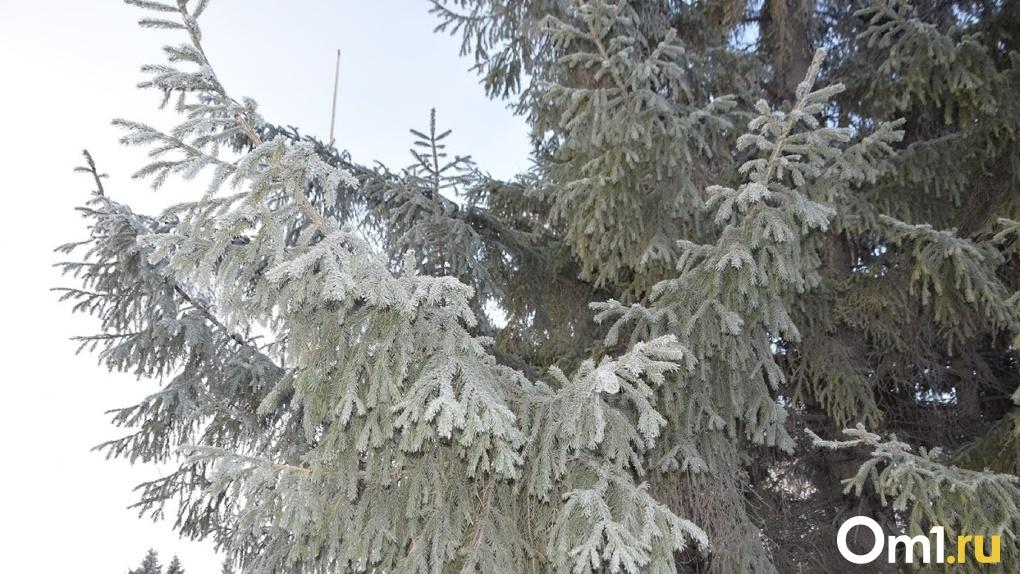 Ночные заморозки вернутся в Омскую область к середине недели
