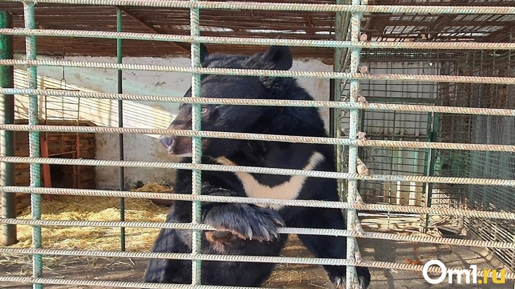 Снег стал причиной бессонницы омских медведей