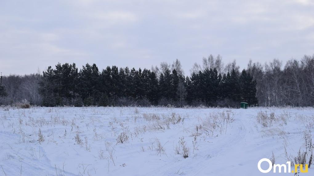 В Омской области «черные лесорубы» наломали дров на 11 млн рублей