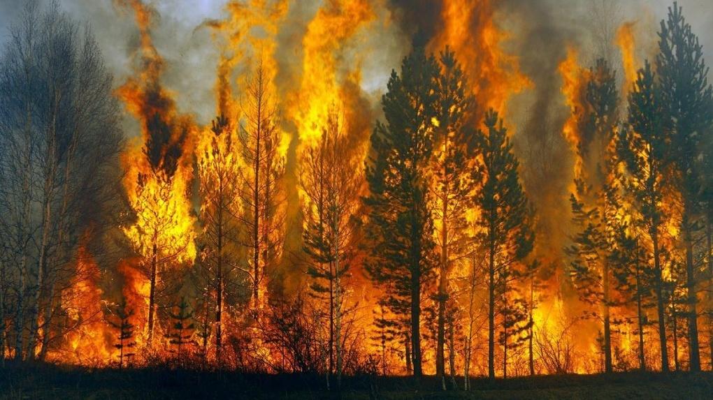В омских лесах объявлен высокий класс пожарной опасности