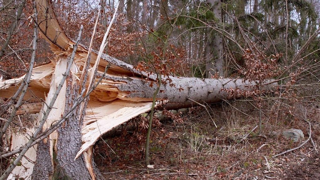 Прошедший в Омске мини-ураган нанес ущерб элитному микрорайону