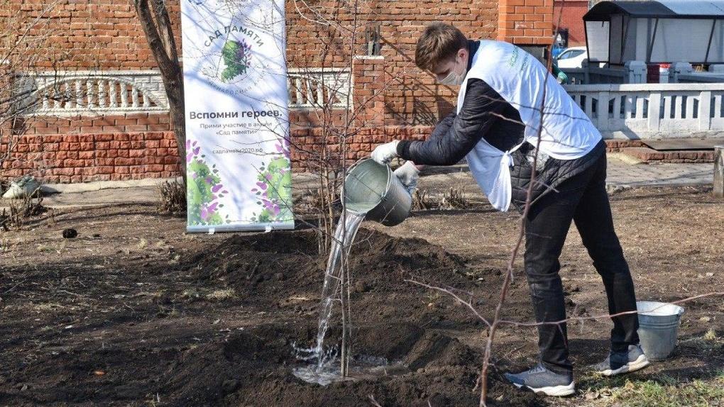 В Омске начали высаживать деревья в рамках акции «Сад Памяти»