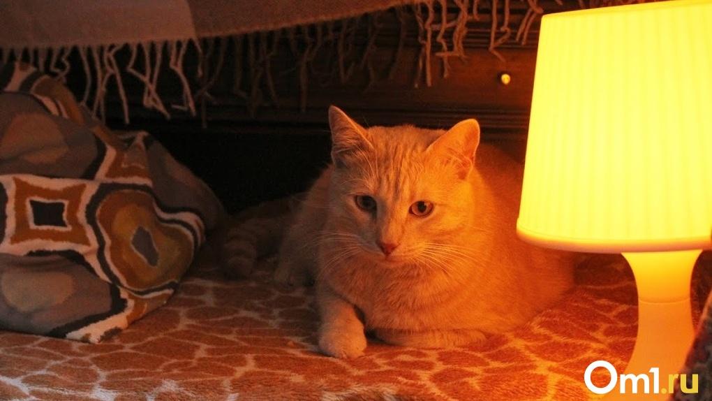В Омске разыскивают 87-летнюю бабушку, которая ушла их дома вместе с рыжим котом
