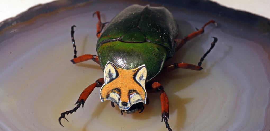 Анатолий Коненко сделал новогодние маски для насекомых