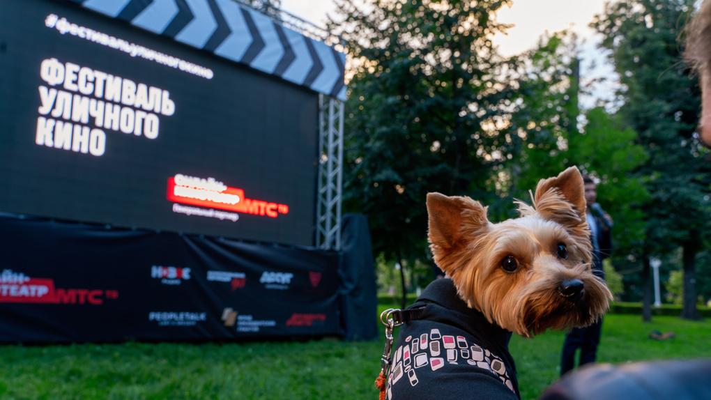 В Омске 26 сентября пройдет фестиваль уличного кино