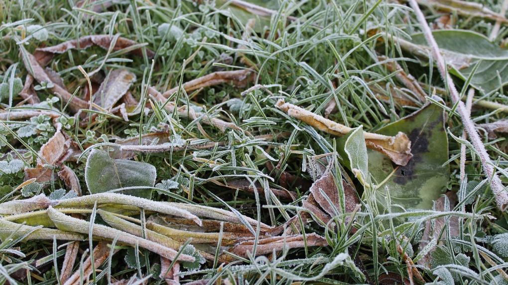 Хрустальная трава и тонкий лёд: в Новосибирске ударили первые заморозки