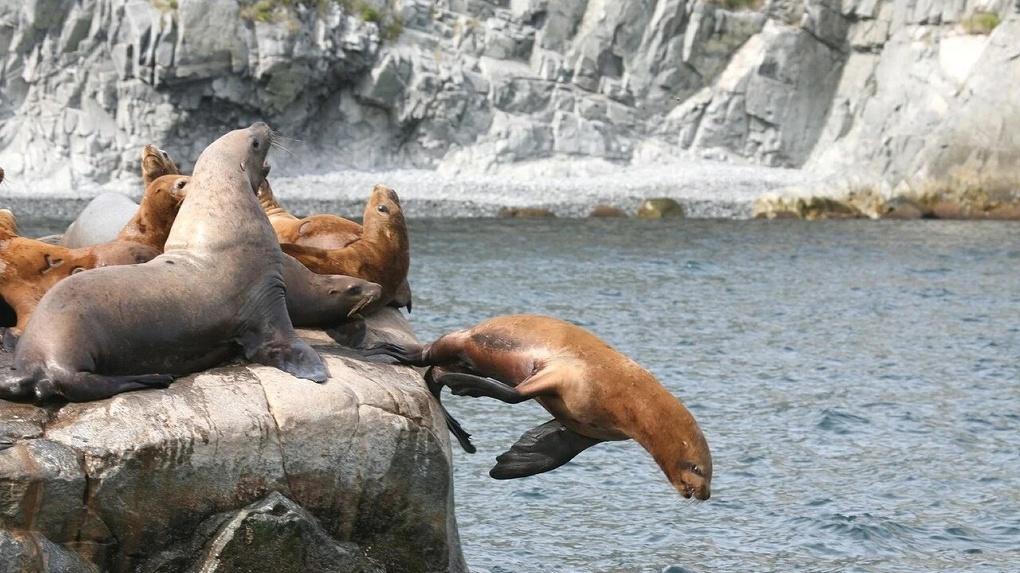 Ученые рассказали, что морские млекопитающие не пострадали от токсичных водорослей на Камчатке
