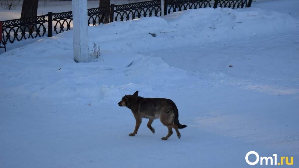 Погрызли собаки. Молодого омича нашли мёртвым под теплотрассой