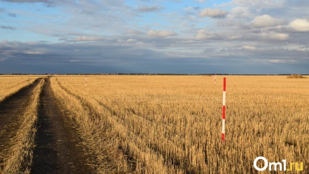 Омское зерно будут тщательнее защищать от нелегального экспорта