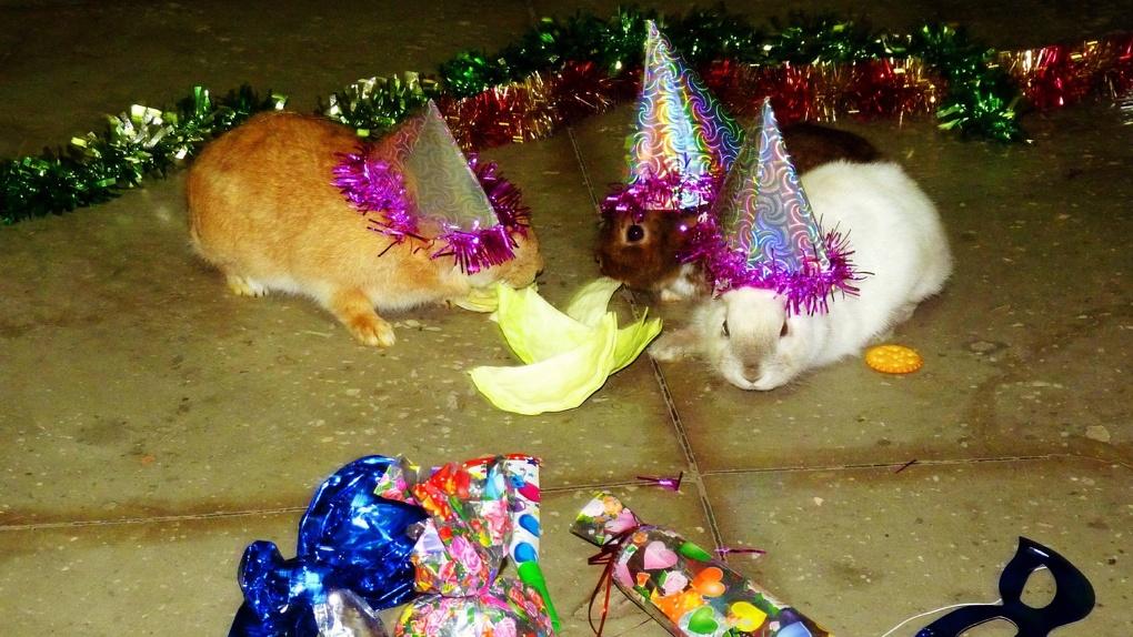Большереченский зоопарк приглашает маленьких омичей на новогоднее торжество