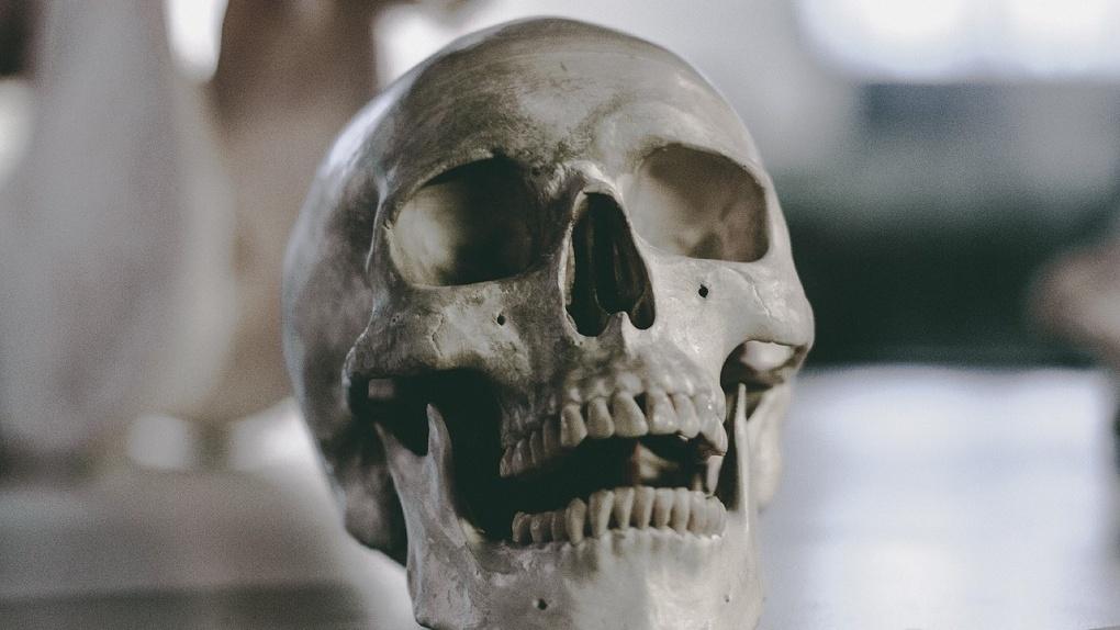 Страшная находка: на севере Омской области нашли скелет человека и мёртвую женщину