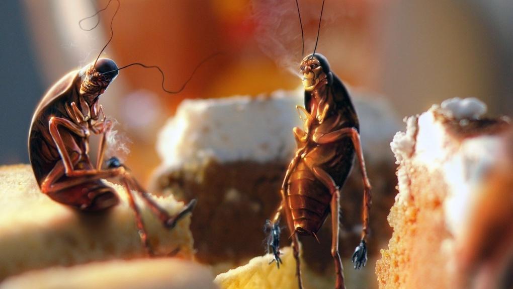 Неизвестные насекомые посеяли среди омичей ужас и панику - ВИДЕО