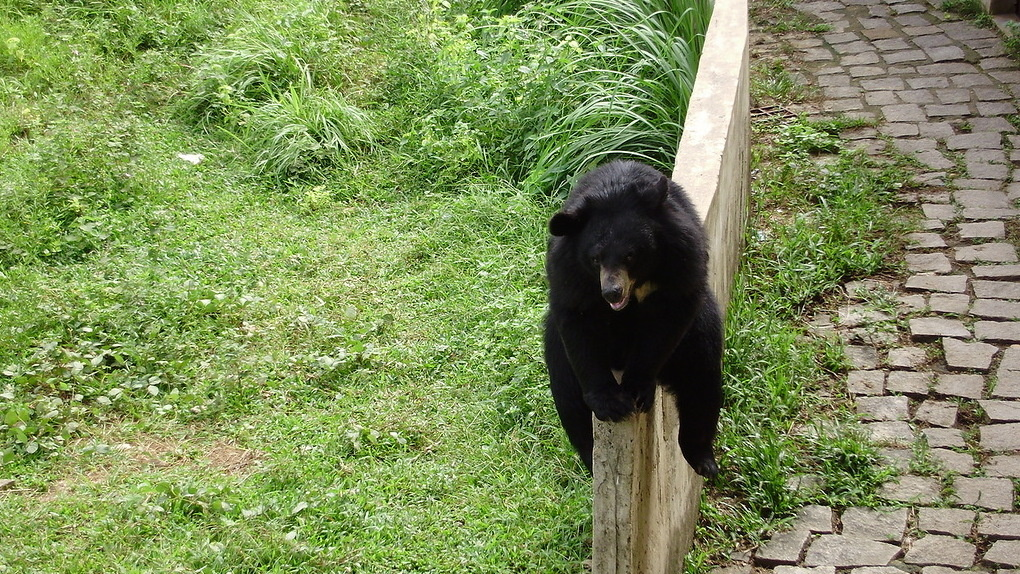 Через забор возле Юбилейного моста в Омске пытался перелезть медведь – ФОТО