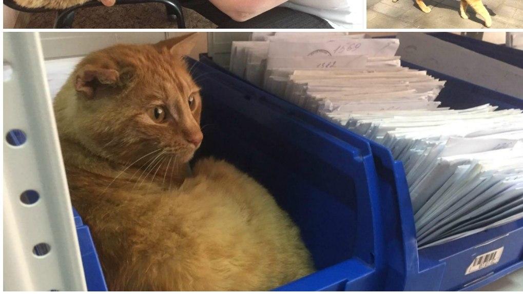 Омский кот получил награду как лучший работник «Почты России»