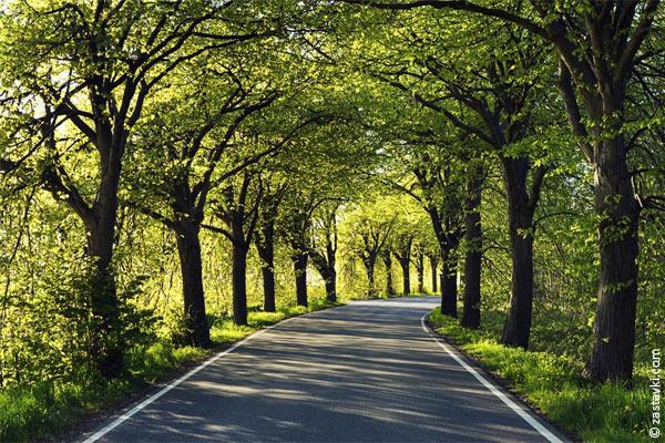 Омские парки обезвредили от клещей