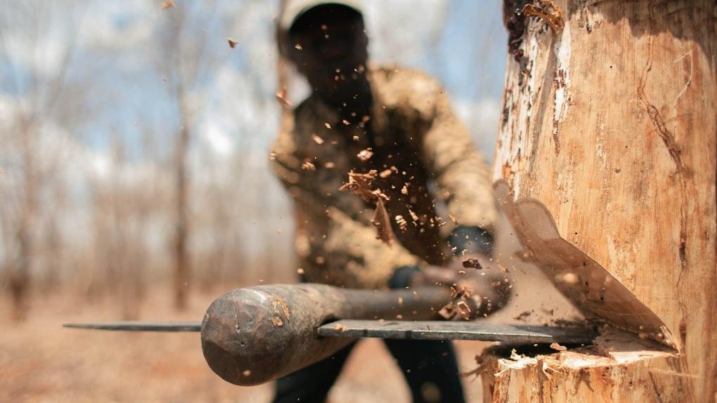 В Омской области «черного лесоруба» осудили на условный срок