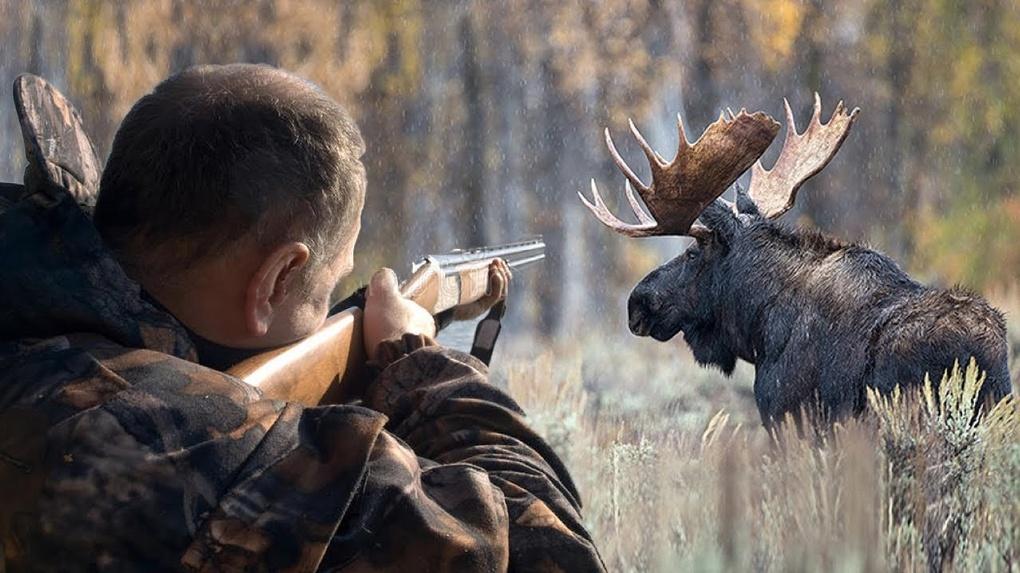 Омские браконьеры убили 43 животных