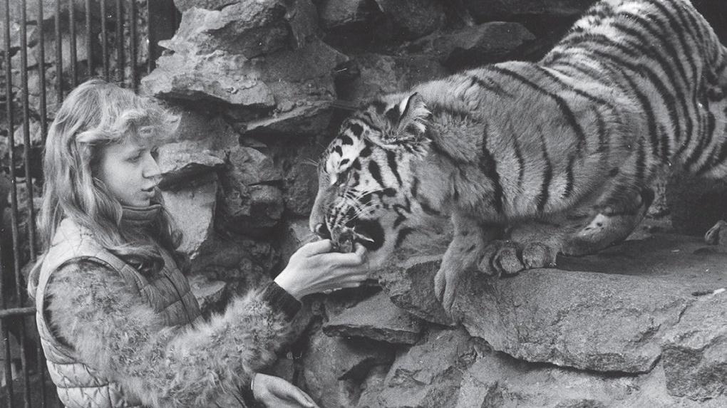 Бесстрашные дети: в Новосибирском зоопарке показали редкие снимки юннатов с тиграми