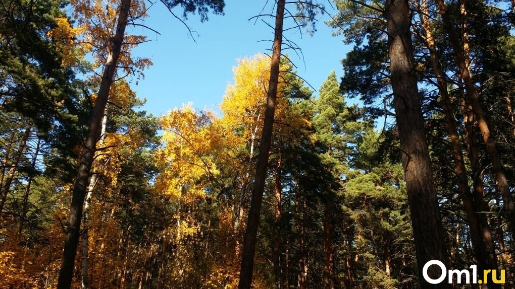 В омских лесах заблудился зеленоглазый хромой охотник