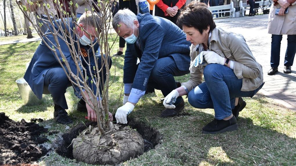 Губернатор Новосибирской области посадил сирень в рамках акции «Сад памяти»