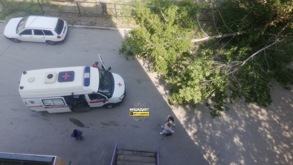 В Новосибирске рухнувшее дерево придавило женщину