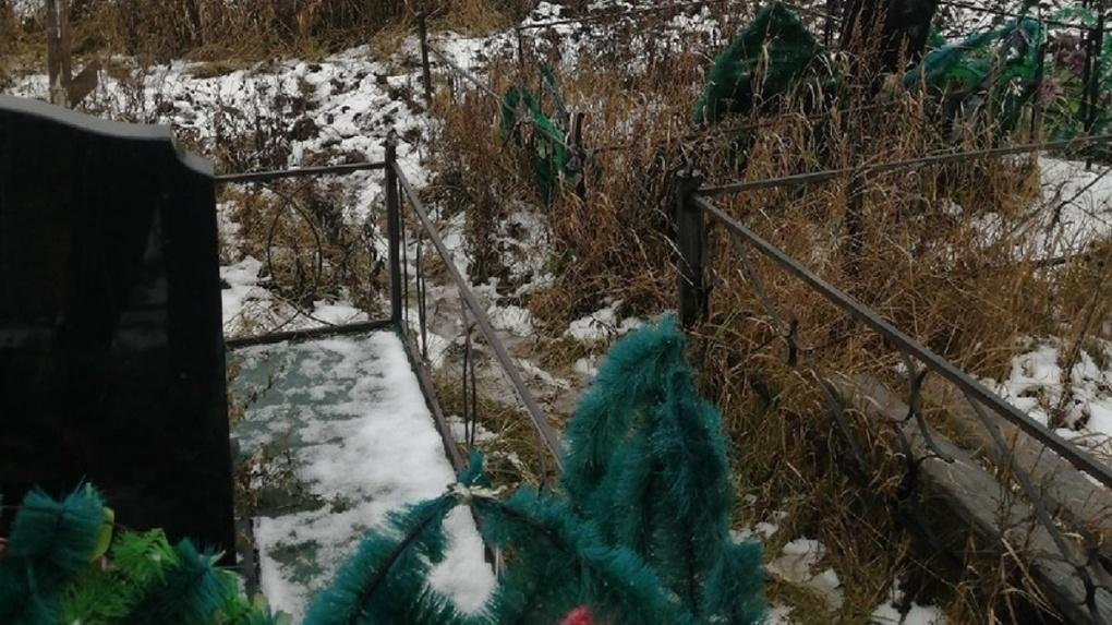 Свиньи перерыли могилы на кладбище в Новосибирской области