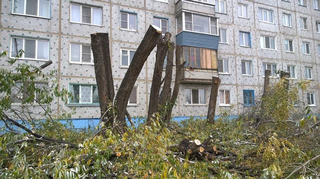 В Омске управляющая компания вместо кронирования обрубила деревья