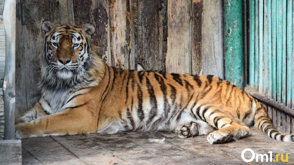 В Большереченском зоопарке строят вольеры для тигров, близкие к их среде обитания