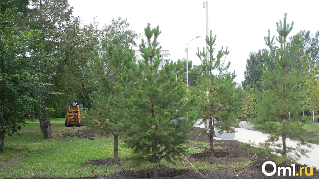 В Новосибирской области посадят еще больше деревьев с помощью новой техники