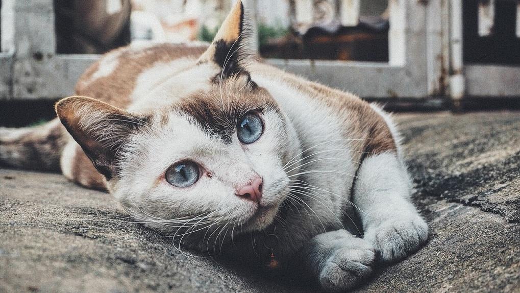 Омичи накинулись в соцсетях на женщину, которая хочет спасти от гибели подвальных кошек