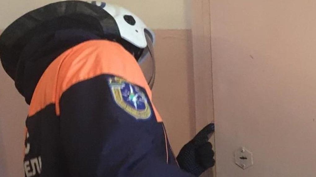 В Новосибирске агрессивная собака едва не растерзала девочку