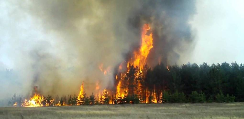 Ветер спровоцировал в Омской области чрезвычайную пожароопасность