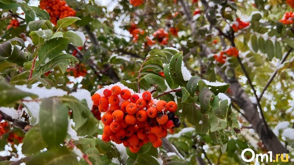 Мало снега и тепло. Синоптики рассказали, каким будет начало зимы в Омске