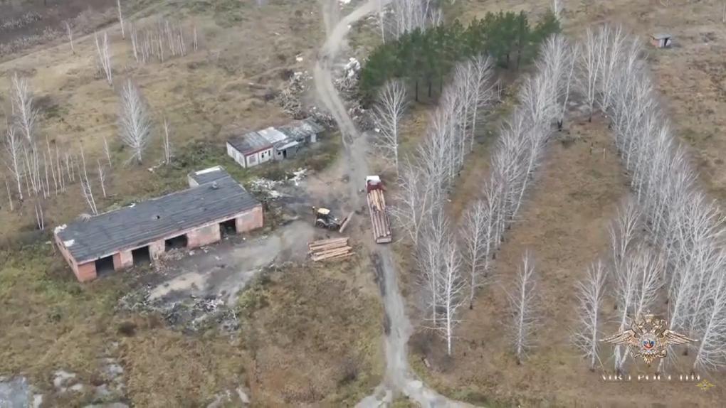 Разоблачающее видео: чёрных лесорубов задержали после избиения журналистов под Новосибирском