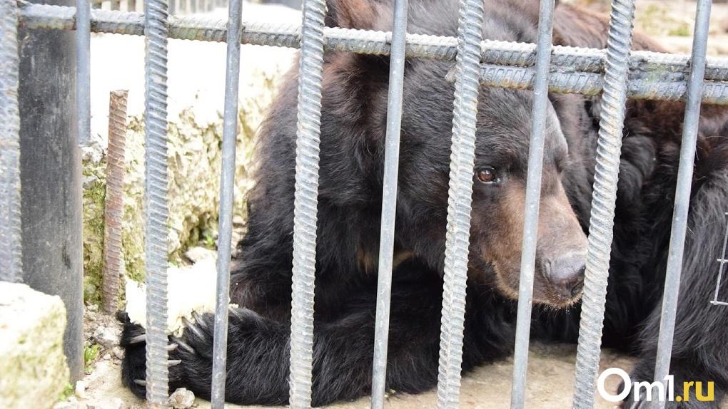 Затащили в вольер и растерзали. Дикие медведи загрызли 11-летнего мальчика