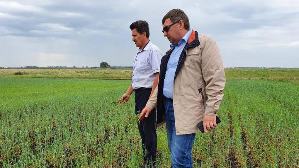 Засуха стала причиной ЧС в нескольких районах Новосибирской области