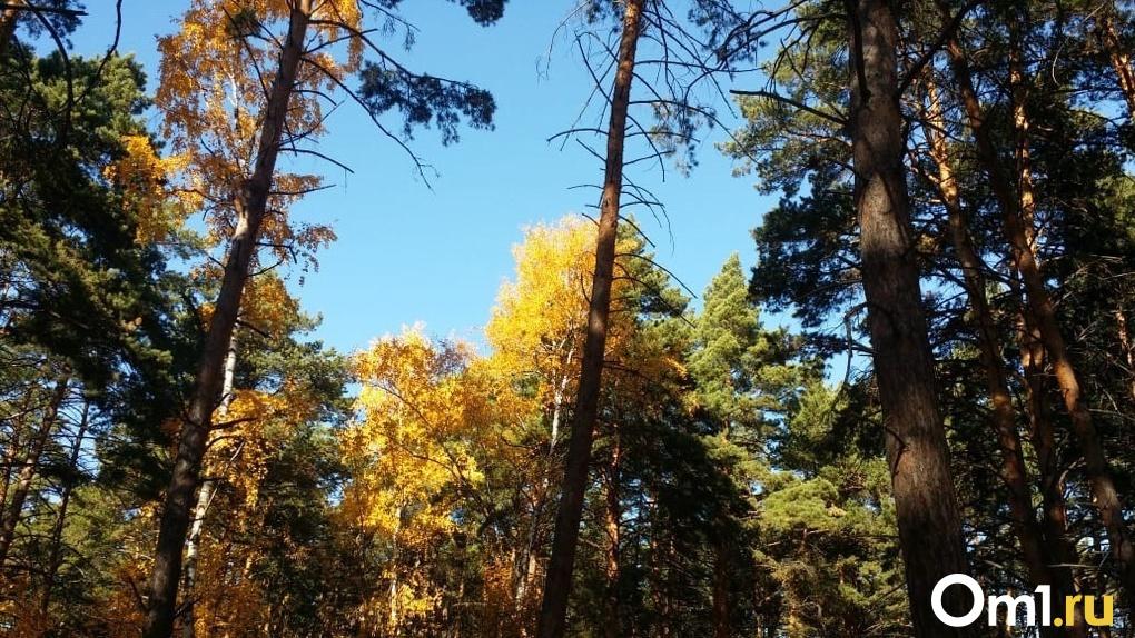 В Омской области появится должность главного федерального лесного инспектора