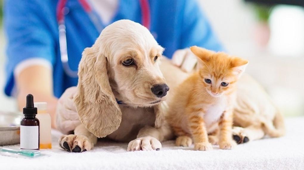 Аллергия у животных: что это и как с ней бороться
