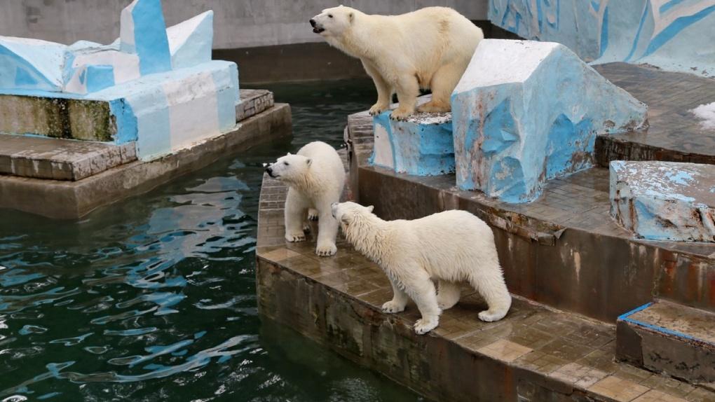 Новосибирский зоопарк снимают с карантина