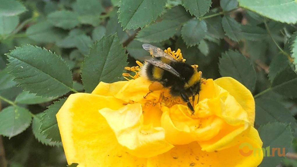 Не дай себе завянуть: топ-9 июньских цветов