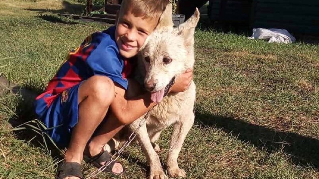 Омские собаки, которые почти год провели без еды и воды после смерти хозяйки, нашли себе новый дом