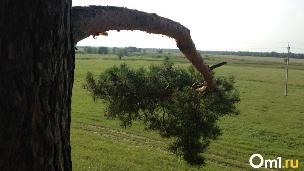 В Омске на маленькую девочку свалилась ветка дерева