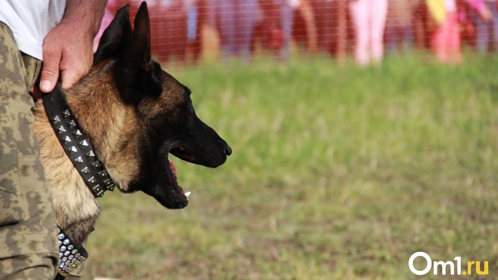 В Омске краденый пакет с пивом искала собака-ищейка
