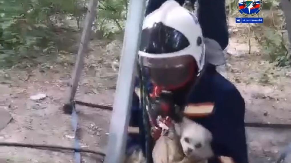 Видео о спасении собаки умилило новосибирцев